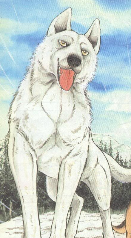 The White Wolf/Gallery