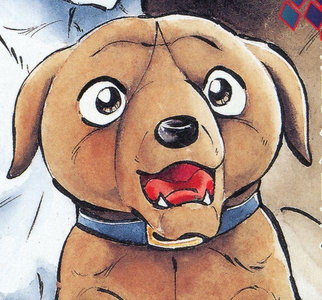 Musashi (Puppy)