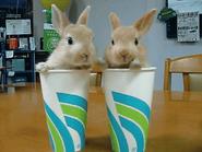 2 bunnies 2 cups
