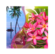 Exotic-Tropical-Blossoms-Fragrance.png
