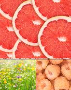 Citrus-and-Daisies-collage-big