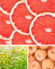 Citrus-and-Daisies-collage-big.png