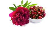 Blooming peony cherry.jpg