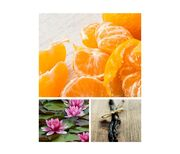 Mandarin-mimosa.jpg