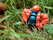 Crayhunter-Kullkizer-Outside-3-WEB