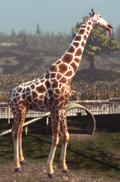 Tall Goat