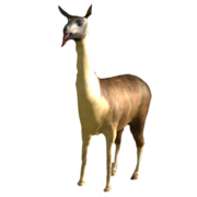 Spitting goat.png