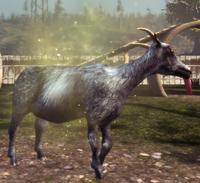 Repulsive Goat Special.png
