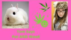 Tom Rabbittt Saga- Claire's Pot AND Weed