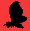 Godzilla 60th Website - Mothra