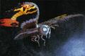 Mothra mill2 imago