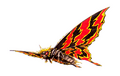 Concept Art - Godzilla vs. Mothra - Battra Imago 12
