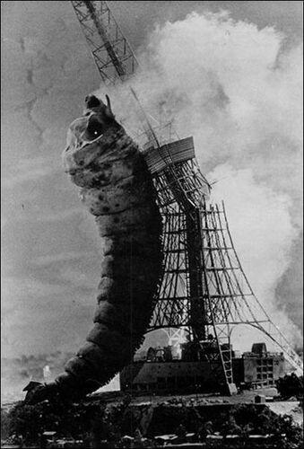 1961 Larva