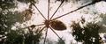 Kong Skull Island - Rise of the King Trailer - 00006