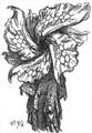 Concept Art - Godzilla vs. Biollante - Biollante Rose 2