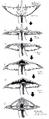 Concept Art - Godzilla vs. Biollante - Biollante Head 3
