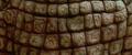 GMK - Baragon Skin