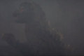 Godzilla bleeding on the cheek