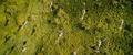 Kong Skull Island - Rise of the King Trailer - 00010