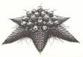 Concept Art - Rebirth of Mothra 2 - Barem 1