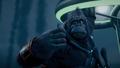 Kong and Botila