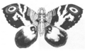 Concept Art - Godzilla vs. Mothra - Mothra Imago 2