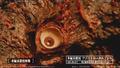 The Making of Shin Godzilla - August 23, 2015 - 00010