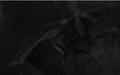 MUTO uses mothra roar