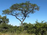 Treesdecal