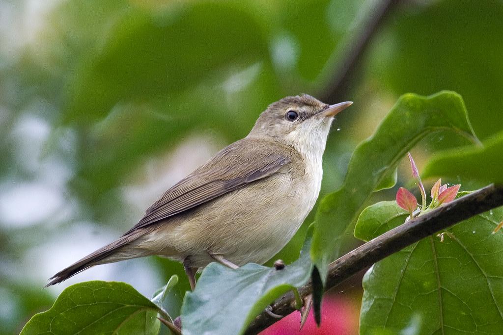 Bird's array notation
