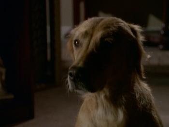 TV (dog)