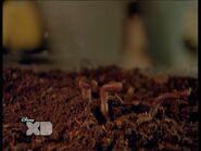Goeatworms 2