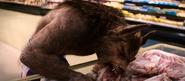 Hungry WereWolf