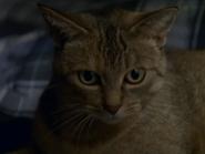 Jasper - My Hairiest Adventure (TV Episode)