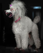 Full body Poodle vampire concept art