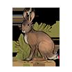 Rabbit.Image.png