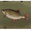 FishMedium.Image.png