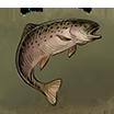 FishBig.Image.png