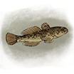 FishSmall.Image.png