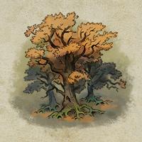 Darkwood grove