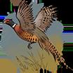 Bird.Image.png