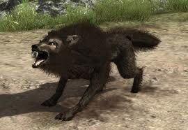 Wilk w ArcaniA