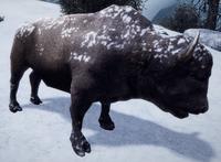 Włochaty bizon (by Kubar906)