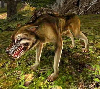 Wilk w Gothic II