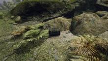 Kamień teleportacyjny do Nemory położenie