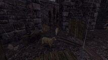 Ucieczka screenshot3.jpg