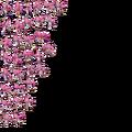 Amy-starlet-2