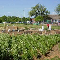 Northside Community Garden