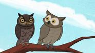 Short7 owl sees owl