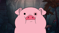 S1e18 Waddles stare.png